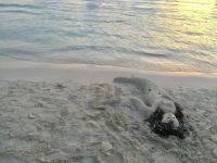Playa-Colonia-001-1024